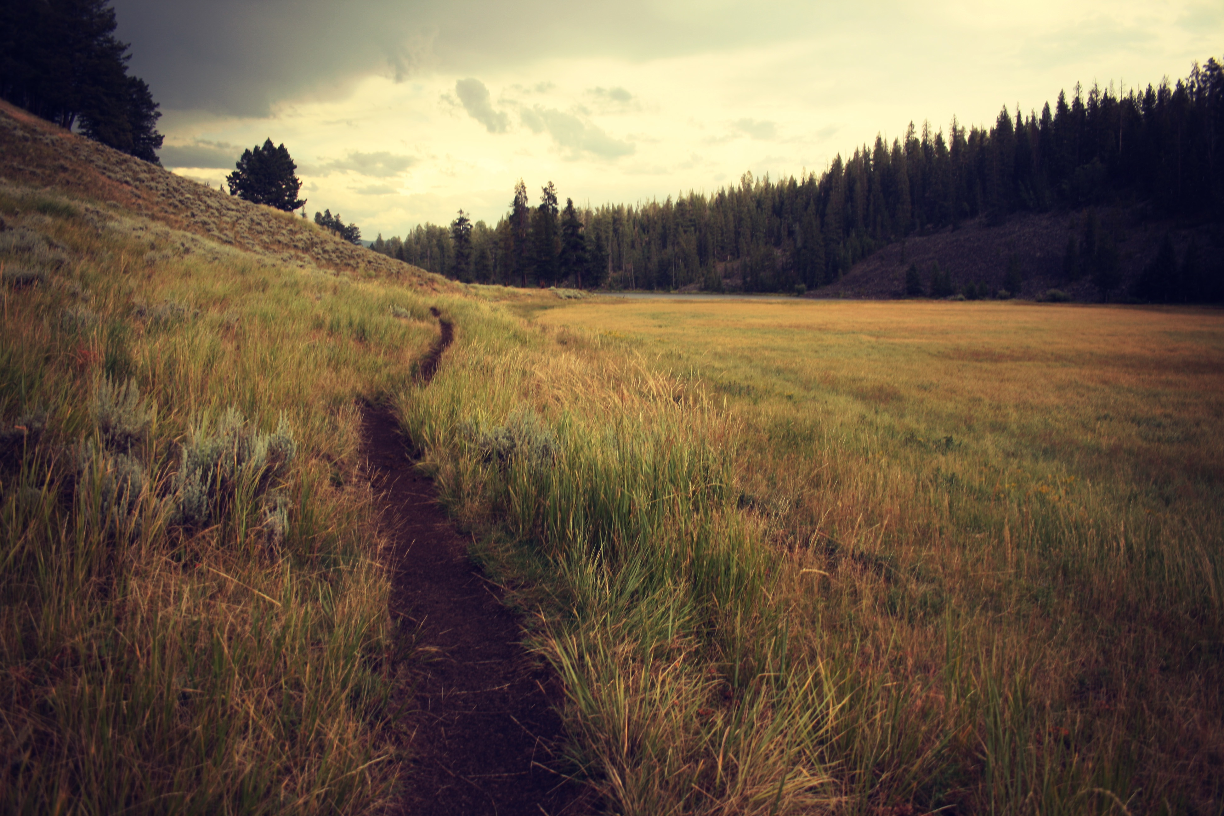 Trail running and its benefits